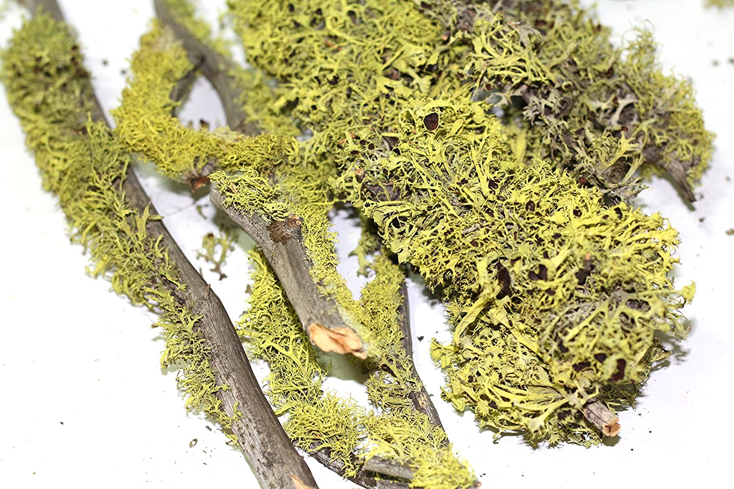 Moss Cover Branches. 6 Pieces of 8 to 14'' Random Size Branches c.nature
