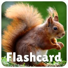 Animal Flashcards and Sounds - Fun and educational game for kids, preschool toddlers, boys and girls - Free