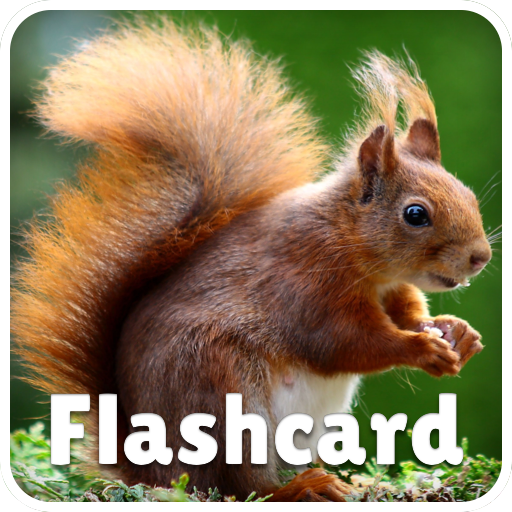 free flash card games for toddlers - 8