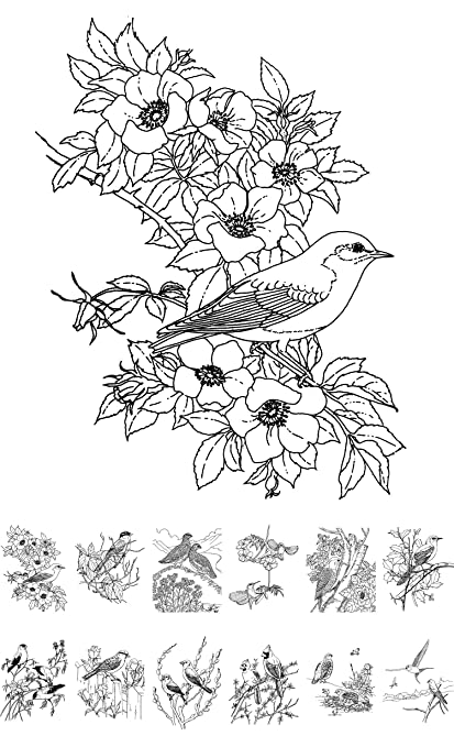 Amazon.com: Adult Coloring Book (24 pages 6\