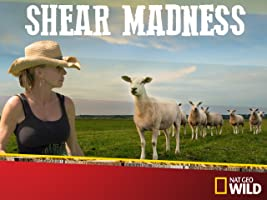 Shear Madness Season 1