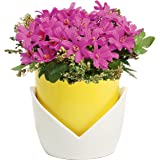 Decorative Yellow & White Nesting Design Ceramic Flower Planter Pot / Plant Container w/ Attached Saucer