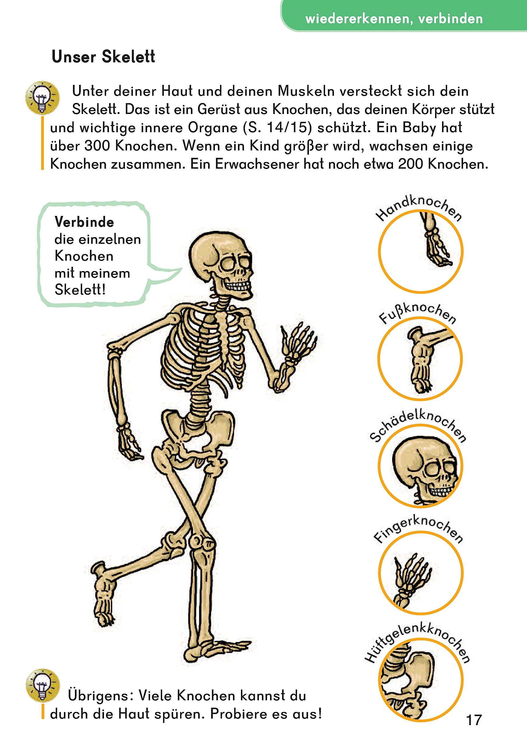 Ausgezeichnet Muskeln Und Knochen Des Körpers Bilder - Menschliche ...