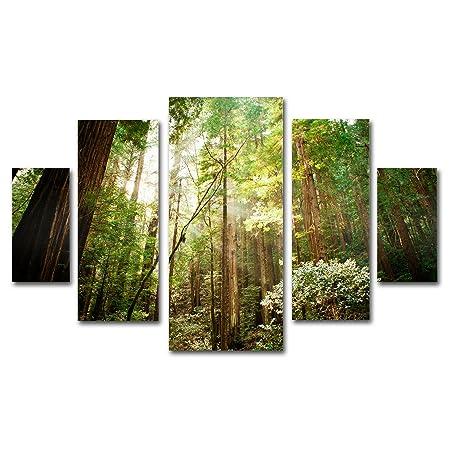 Muir Woods Multi Panel Art Set by Ariane Moshayedi