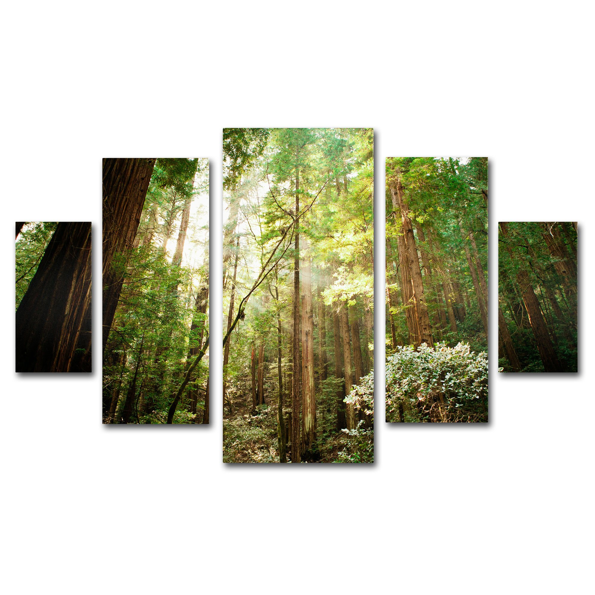 ''Muir Woods'' Multi Panel Art Set by Ariane Moshayedi