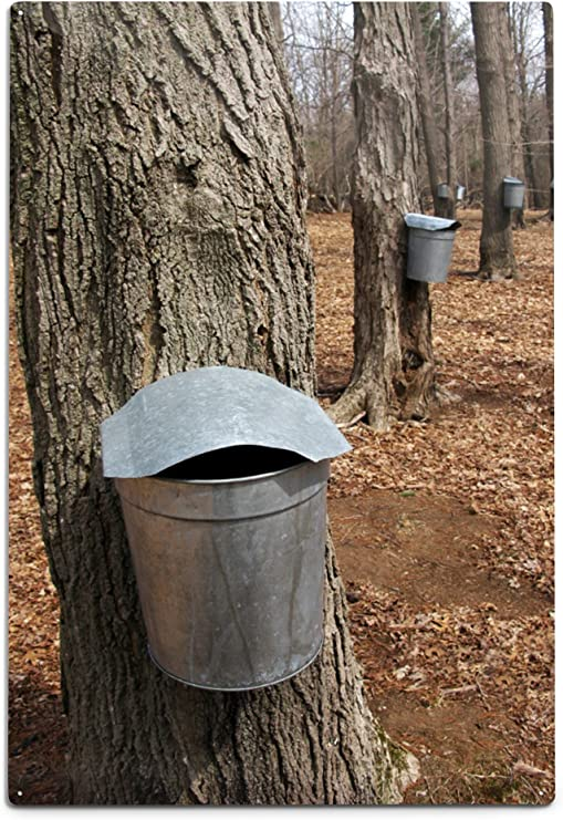 Ready to Use 15 Maple Syrup Aluminium  Sap Bucket SPOUTS TAPS SPILES