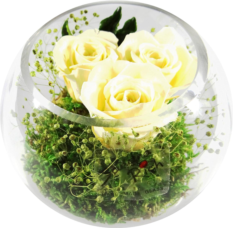 Rosen-te-amo Konservierte Rosen Blumen-Strauß in der Vase enthält drei ECHTE PREMIUM champagne Haltbare Rosen – unser EXKLUSIVES Blumen-Arrangement wird handgemacht und mit Liebe gefertigt