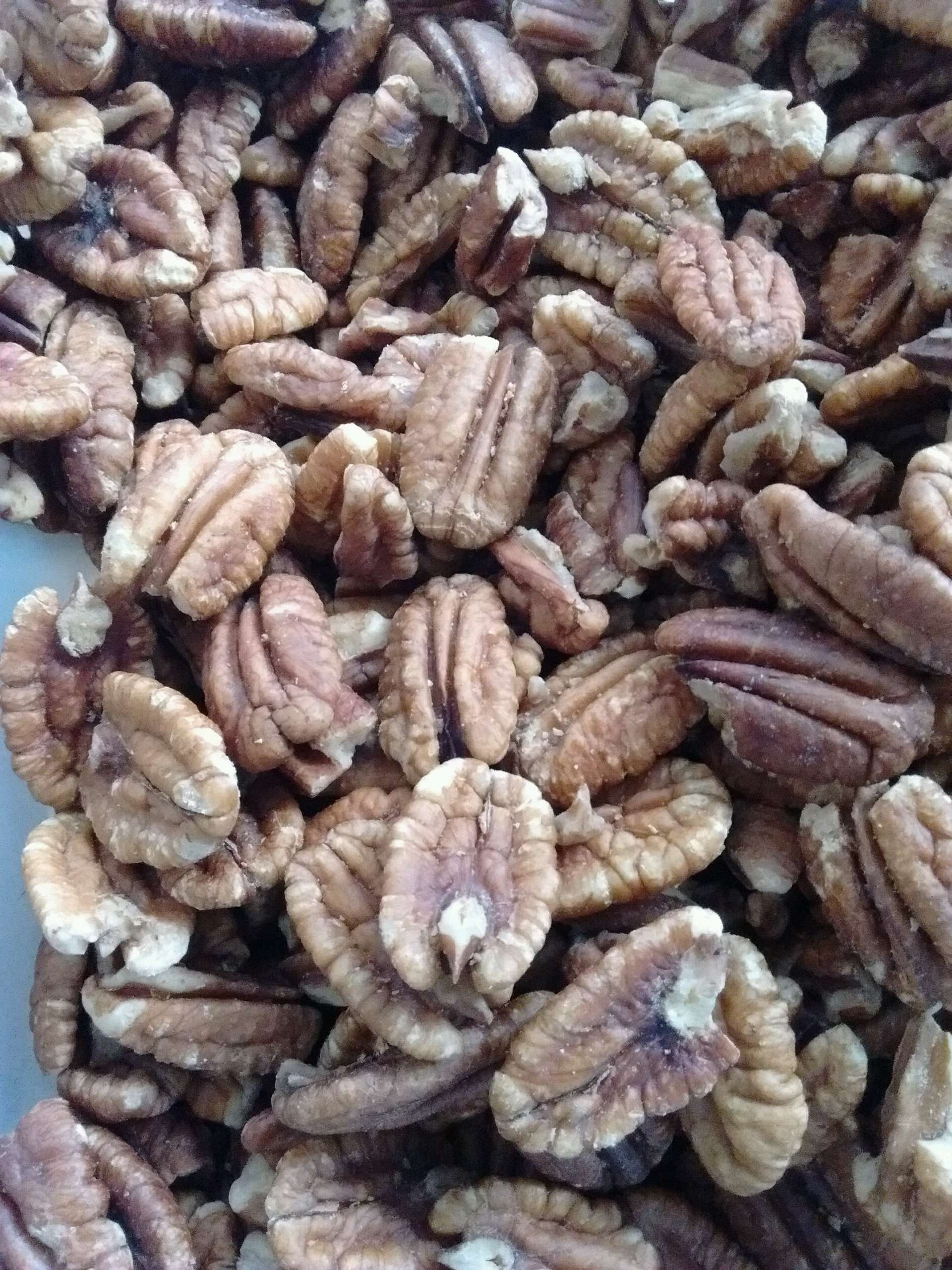 Certified Organic Sprouted Sea Salt Texas Papershell Pecans, 5 Lb. Family Orchard Grown