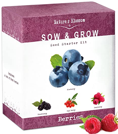 The Beginners Set To Grow 4 Types Of Berries From
