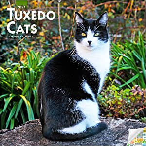 Tuxedo Cats Calendar 2021 Bundle - Deluxe 2021 Tuxedo Cat Wall Calendar with Over 100 Calendar Stickers (Cats Lover Gifts, Office Supplies)