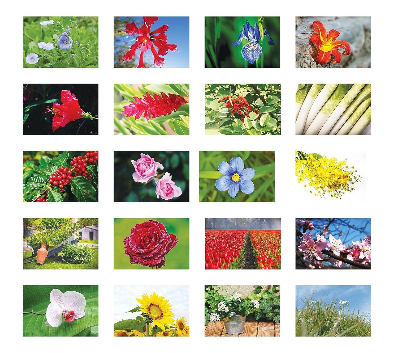 Around The World In 80/Flowers