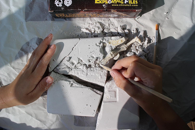 【気分は考古学者!】ティラノ ザウルス 骨格 標本 化石 発掘 キット t-rex 恐竜