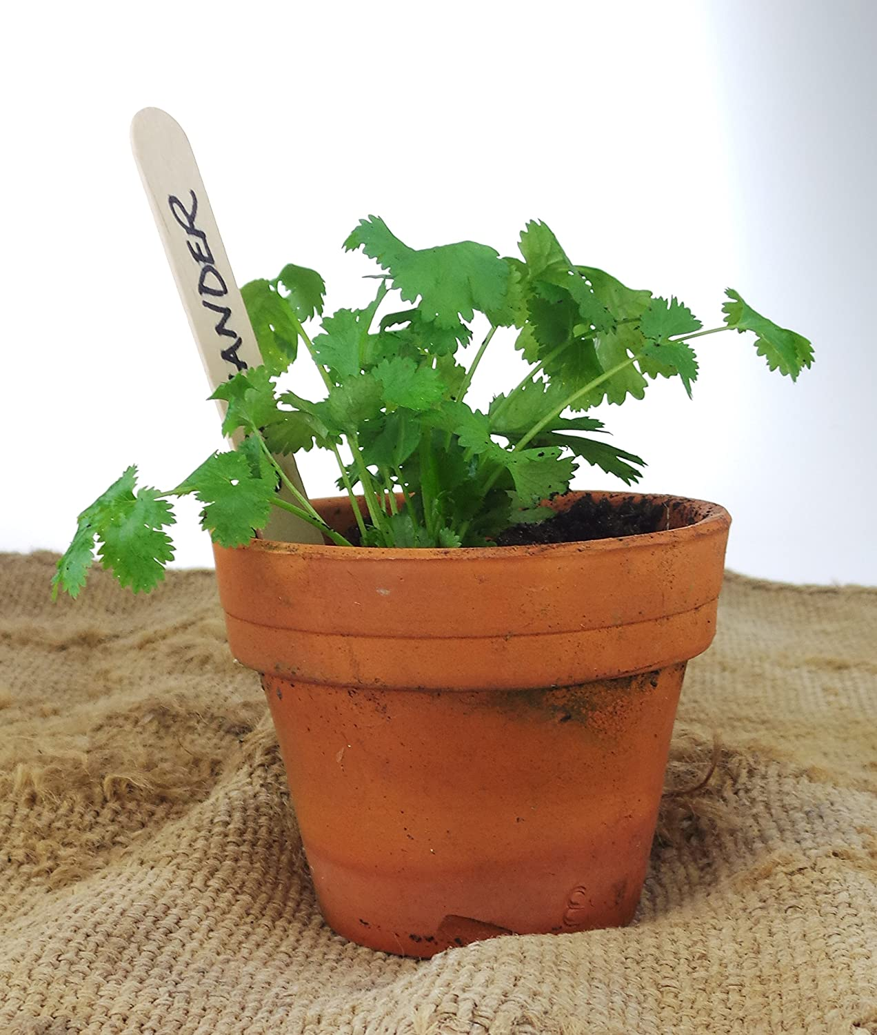 100+ Large Biodegradable Blank Wooden Seed, Herb and Plant Labels Markers (15cm x 2cm) (100 Plant Labels) STS