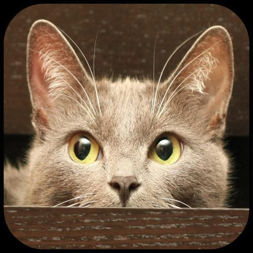 Cat (Hello Kitty Wallpaper)