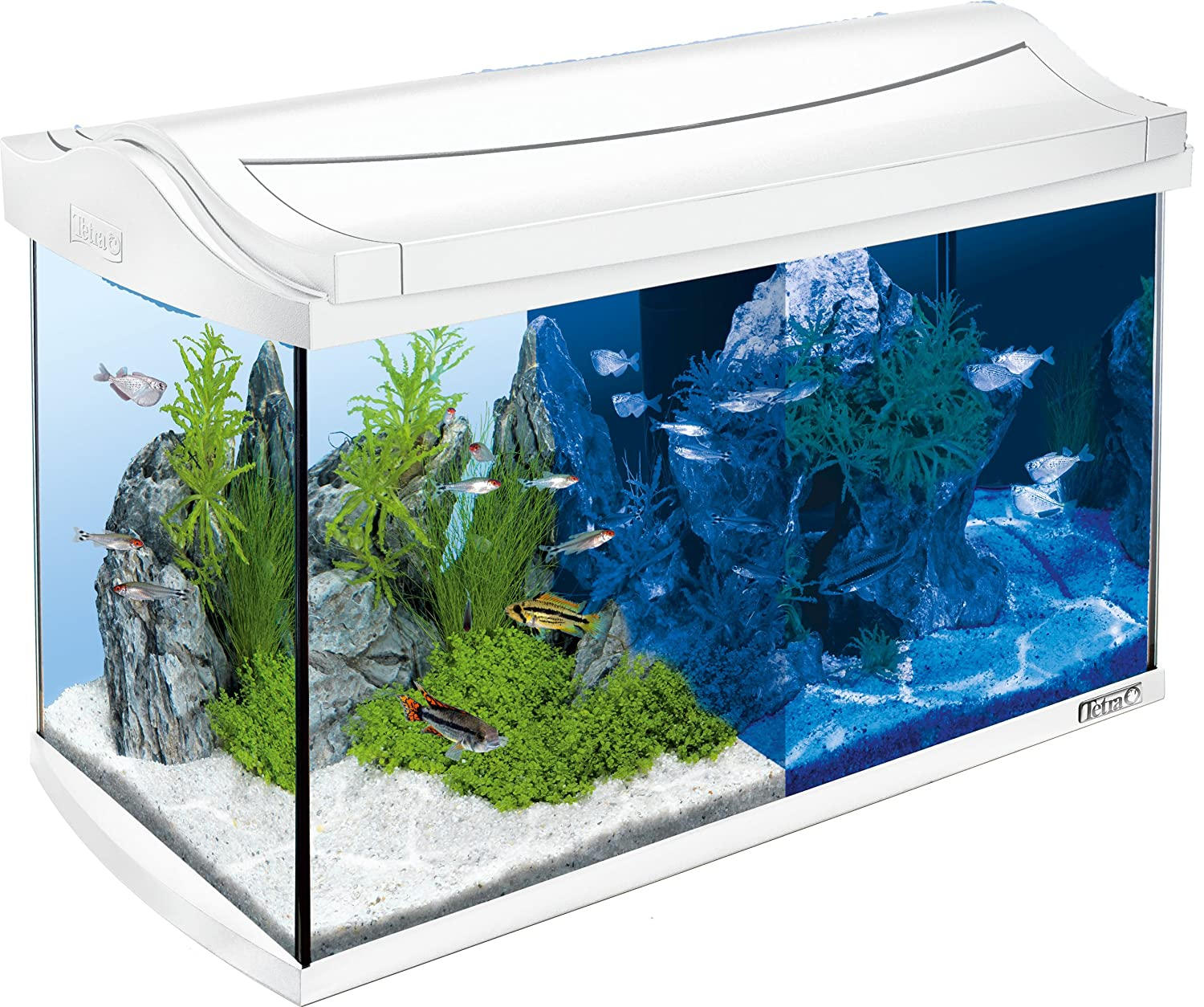 tetra aquaart discovery line led aquarium komplett set wei inklusive led beleuchtung tag und. Black Bedroom Furniture Sets. Home Design Ideas