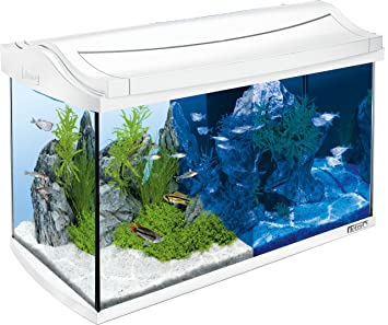 Tetra Acuario AquaArt LED 60 l Blanco 60 L White: Amazon.es: Productos para mascotas