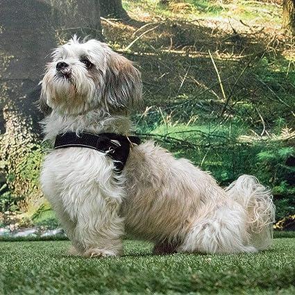 mittel und gro/ße Hunde Norweger-Geschirr gepolstert Keanu Bellomania Hundegeschirr Neopren Gr/ö/ße S bis L f/ür kleine