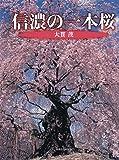 信濃の一本桜