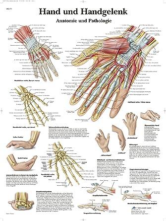 Die Anatomie Des Handgelenks Hand – Athletbook