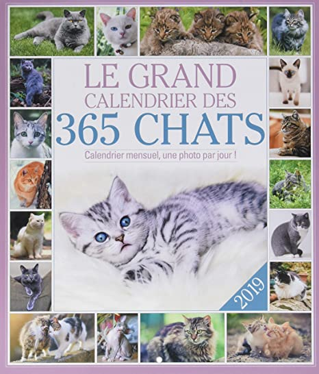 El gran calendario de los 365 gatos 2019