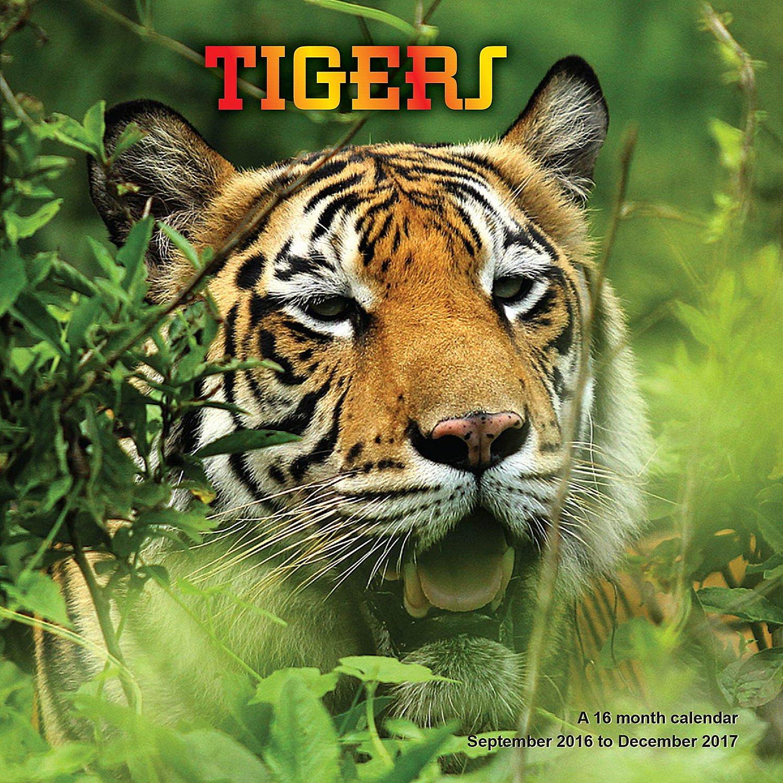 Download Tiger Calendar - 2017 Wall Calendars - Calendar 2016 - Wildlife Calendar - Monthly Wall Calendar by Magnum PDF
