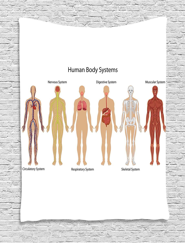 Amazon Ambesonne Human Anatomy Tapestry Human Body With