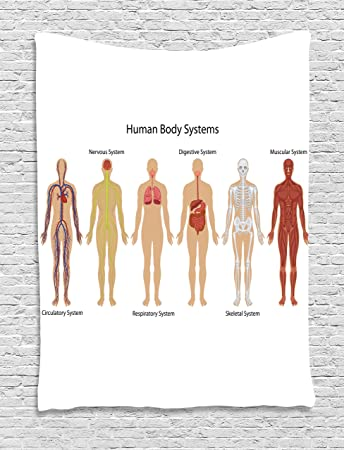 Amazon Human Anatomy Tapestry By Ambesonne Human Body With