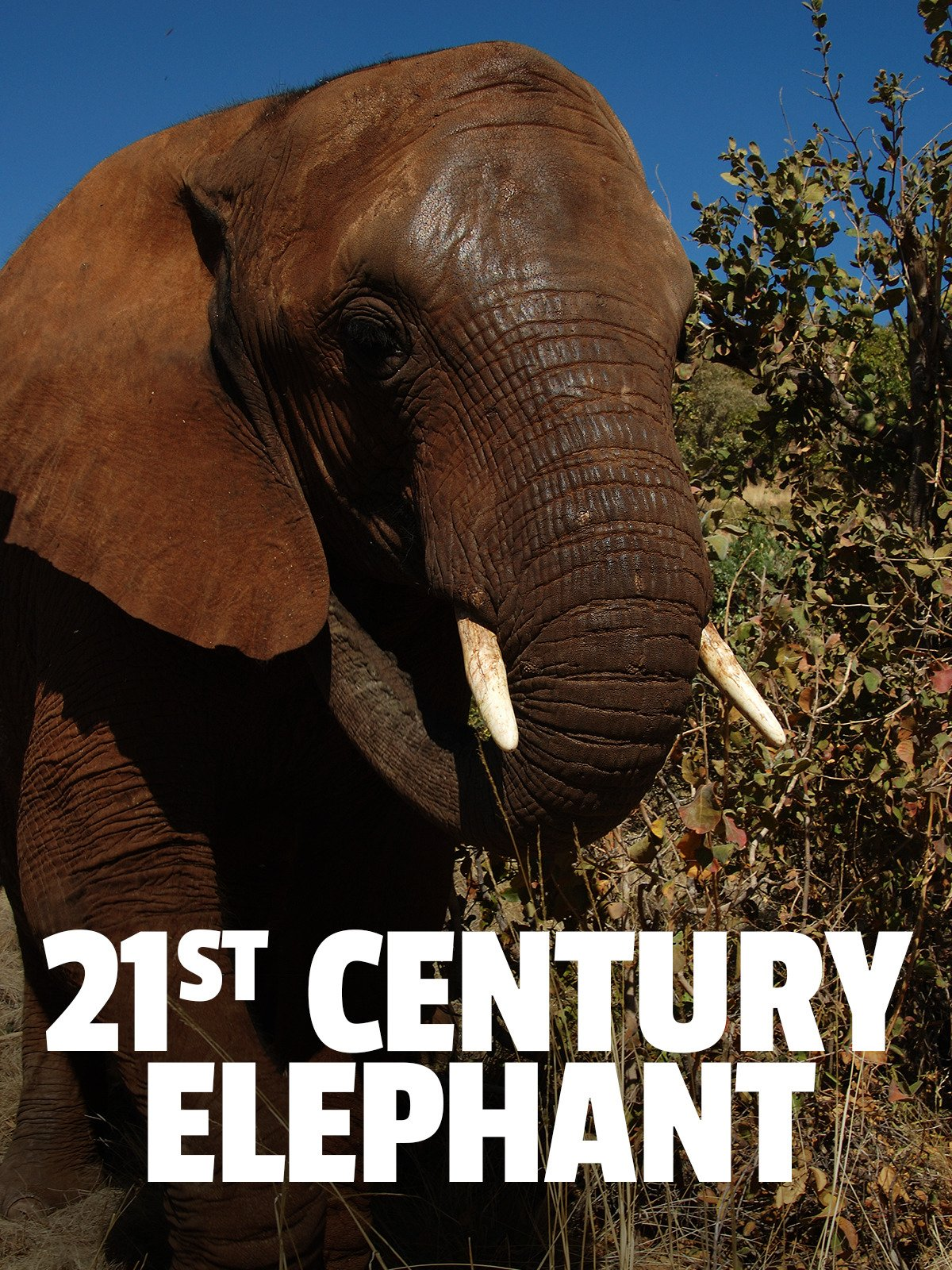 21st Century Elephant on Amazon Prime Video UK