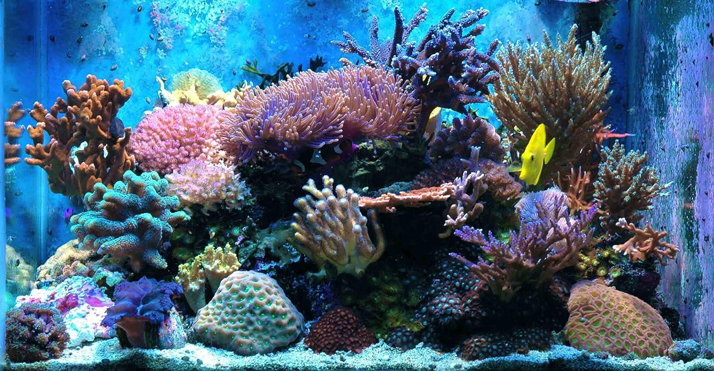 Decor aquarium recifal choix entre fo et rcifal manuel for Eau de mer aquarium