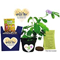 TickleMe Plant Mazel Tov Bat or Bar Mitzvah Gift Gift Set - Grow The House Plant...