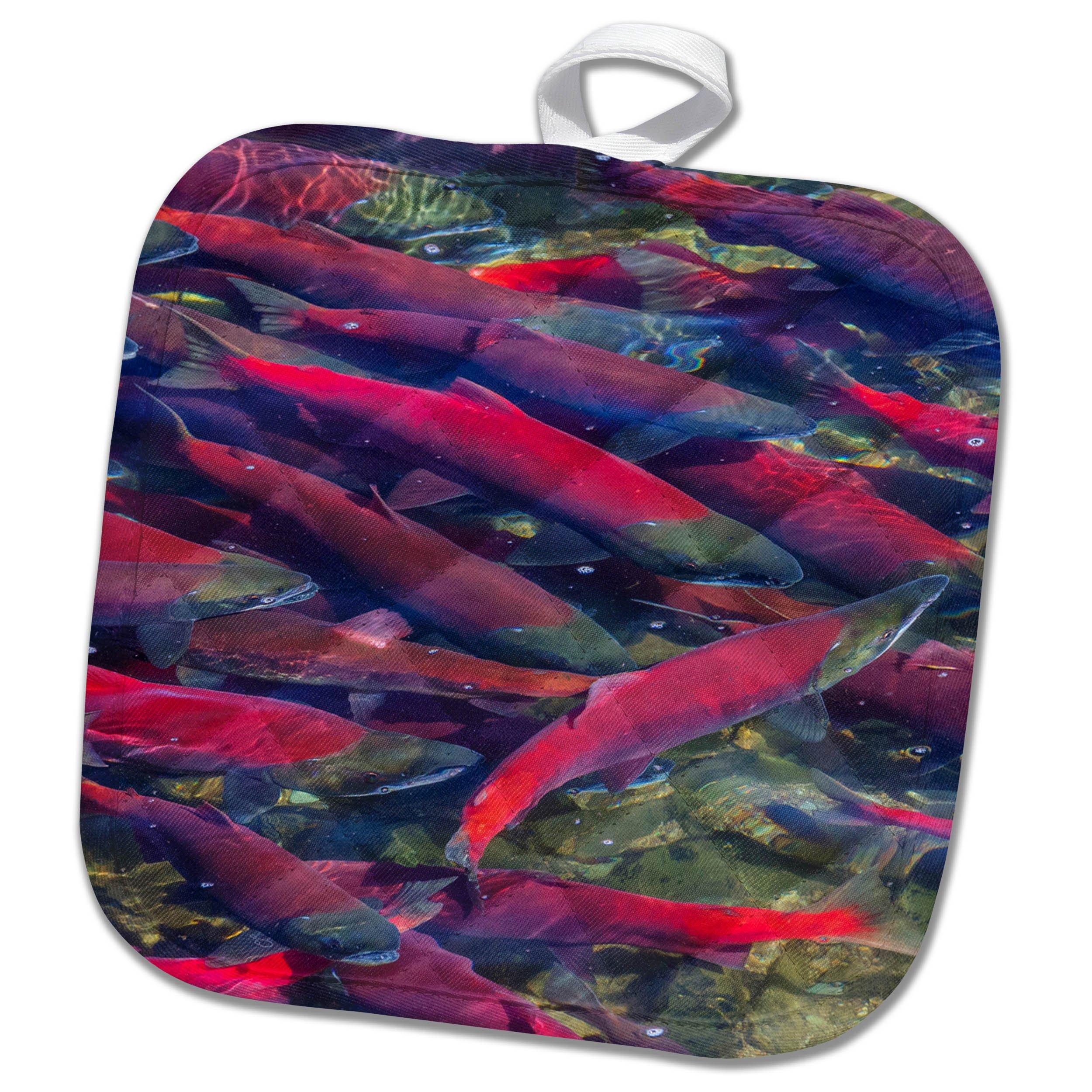 3dRose Danita Delimont - Fish - Migrating sockeye salmon, Katmai National Park, Alaska, USA - 8x8 Potholder (phl_278330_1)