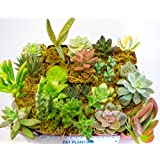 Fat Plants San Diego Succulent Plants (18)