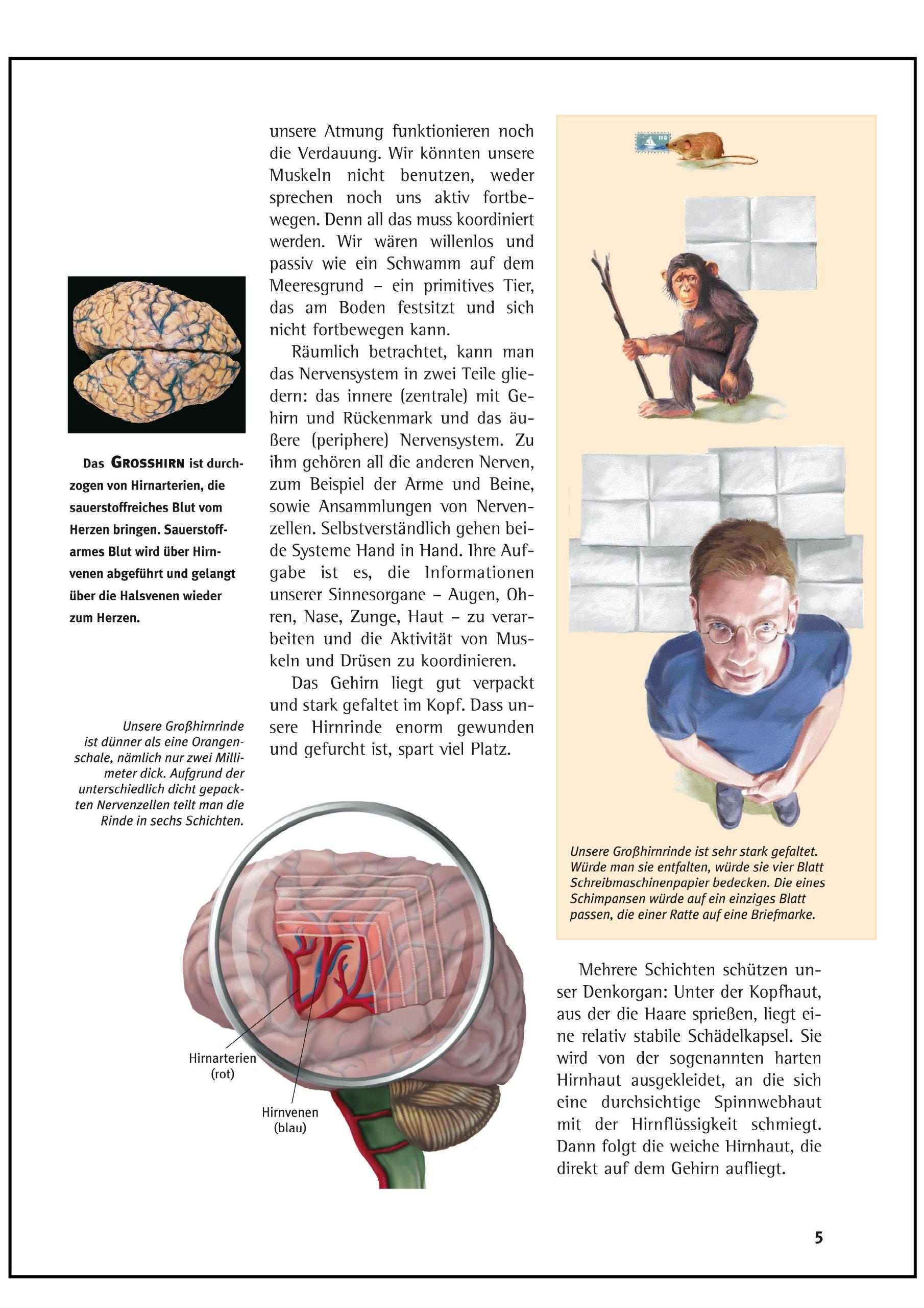 Wunderbar Schichten Der Anatomie Des Gehirns Zeitgenössisch ...
