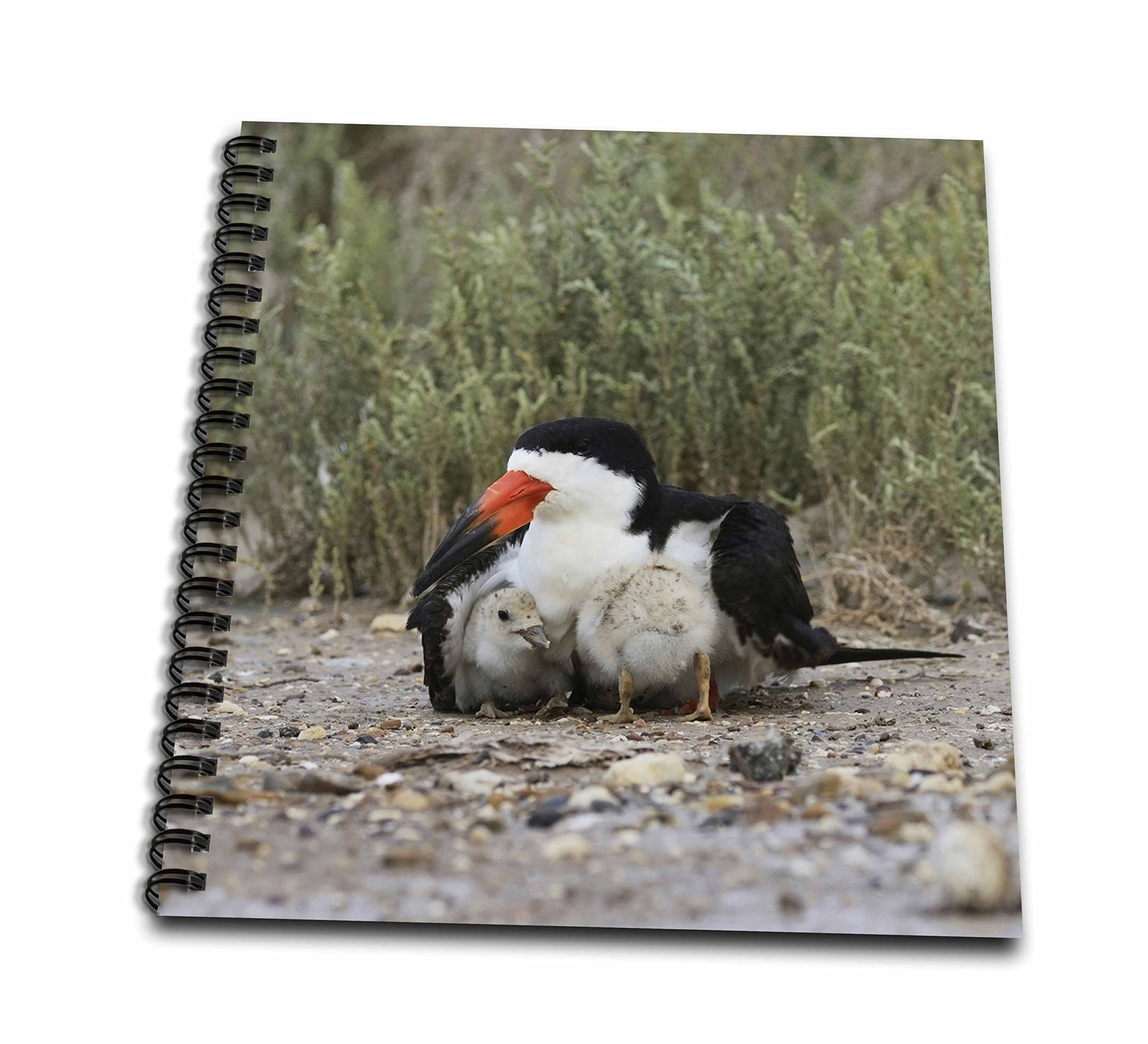 3dRose Danita Delimont - Birds - Black Skimmer keeeping chick warm, South Padre Island, Texas - Drawing Book 8 x 8 inch (db_279518_1) by 3dRose (Image #2)