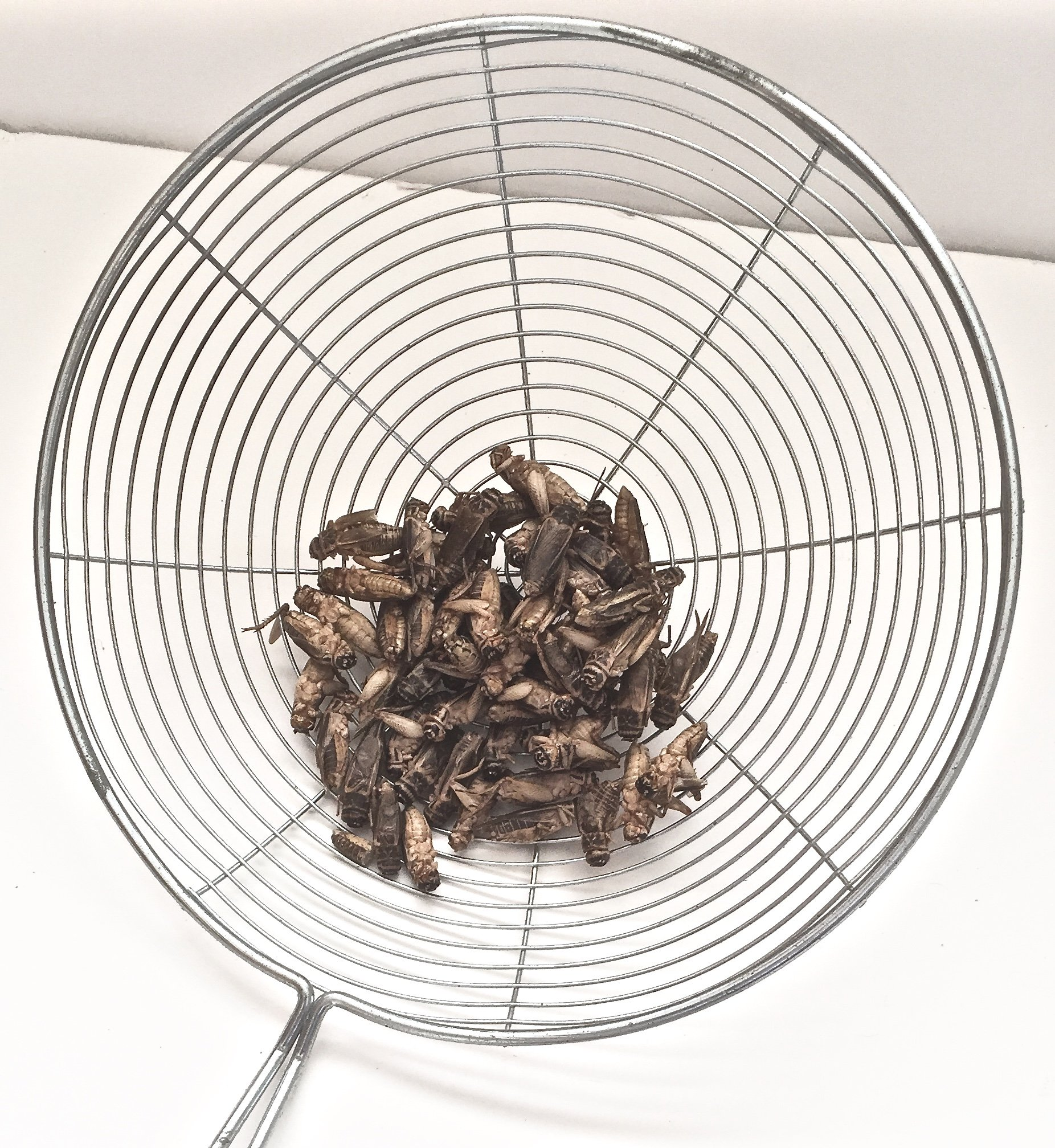 FREEZE DRIED CRICKETS (SIFTED!) 8 OZ