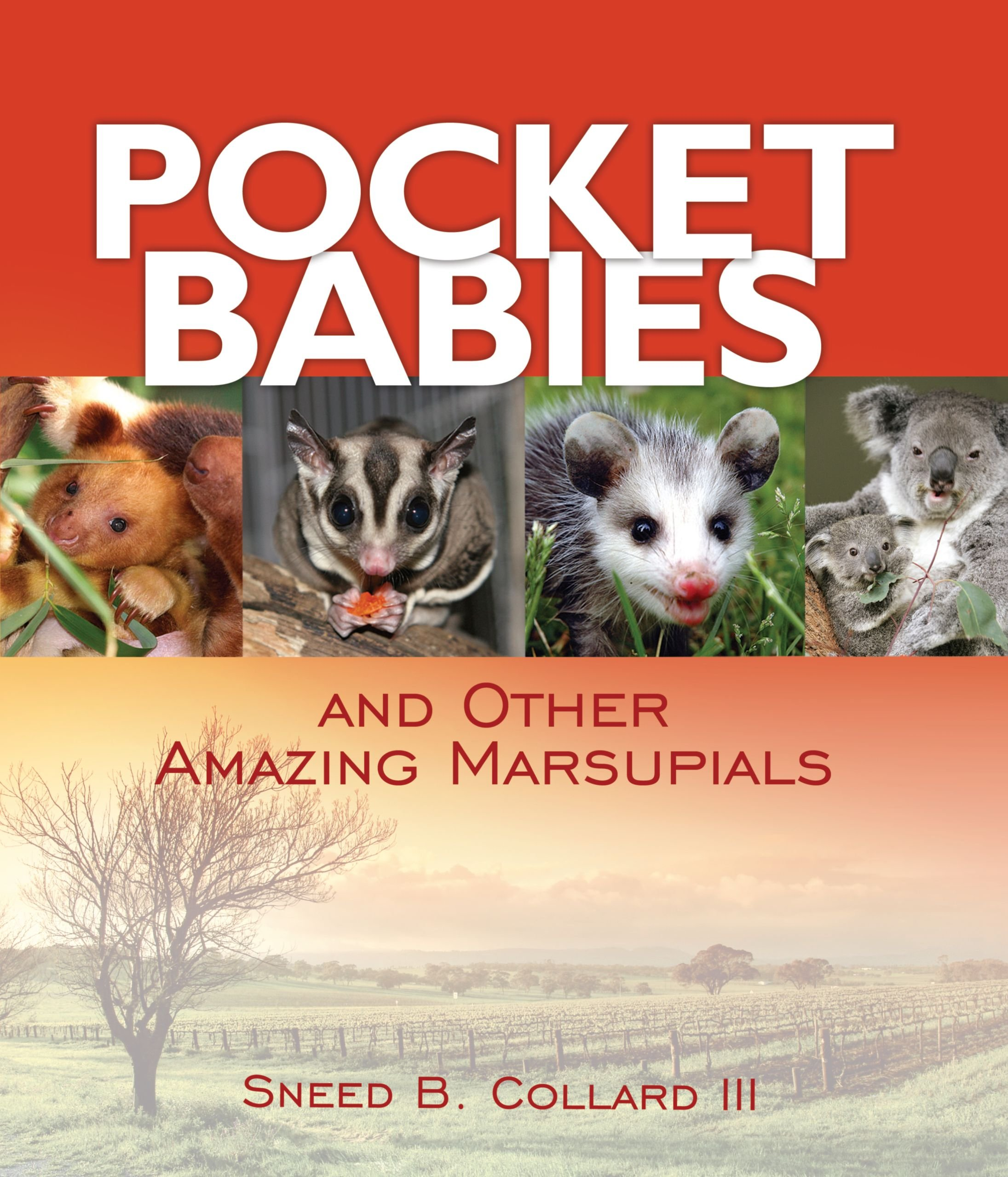 Pocket Babies: And Other Amazing Marsupials (Junior Library Guild Selection) pdf epub