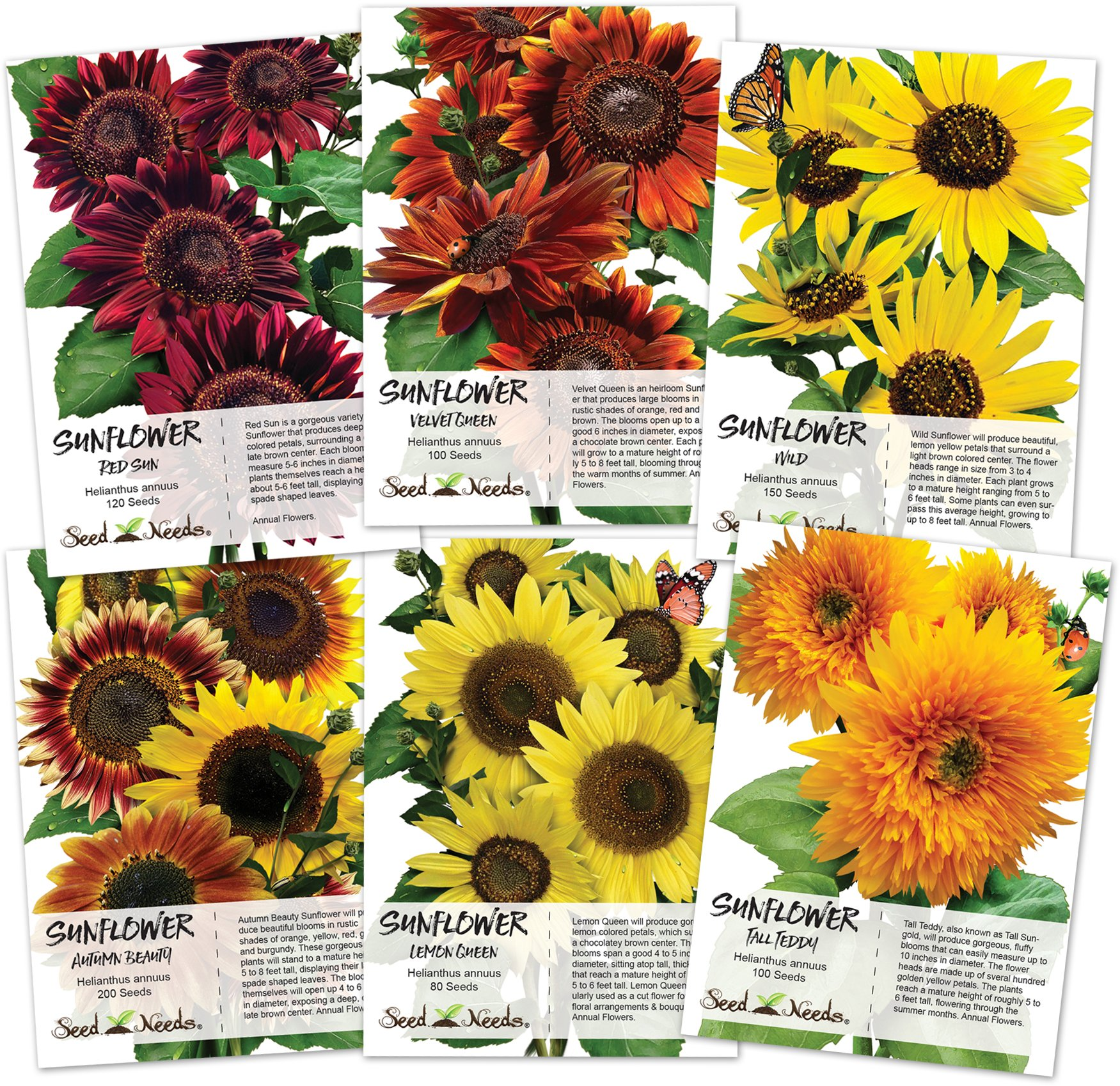 Crazy Sunflower Seed Packet Assortment (6 Individual Seed Packets) Non-GMO Seeds by Seed Needs by Seed Needs
