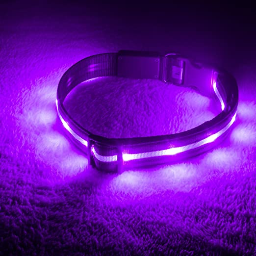 Blazin' Safety LED Dog Collar – USB Rechargeable with Water Resistant Flashing Light – Large Purple