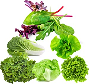 Lettuce Seeds for Planting Home Garden Outdoors - Six Pack Variety Mix of Romaine - Butter - Mesclun Mix - Leaf Salad Bowl - Head Iceberg - Black Seeded Simpson!