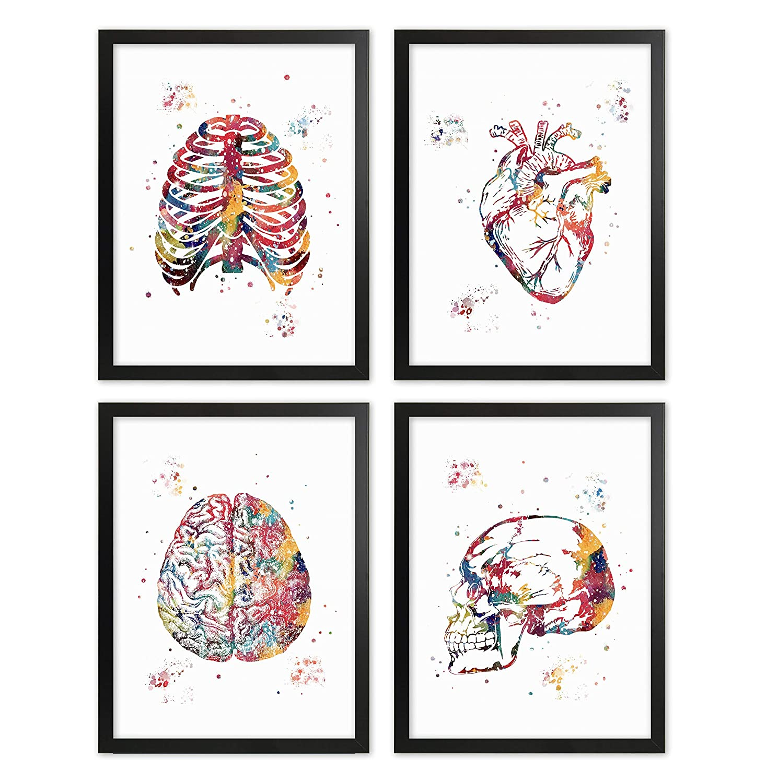 Framed Human Anatomy Poster Set Human Skull Wall Art Brain Clinic Doctor Heart Office Decor Rib Cage Medical Nurse Gift Lungs Heart Print Illustration Anatomy Print Set
