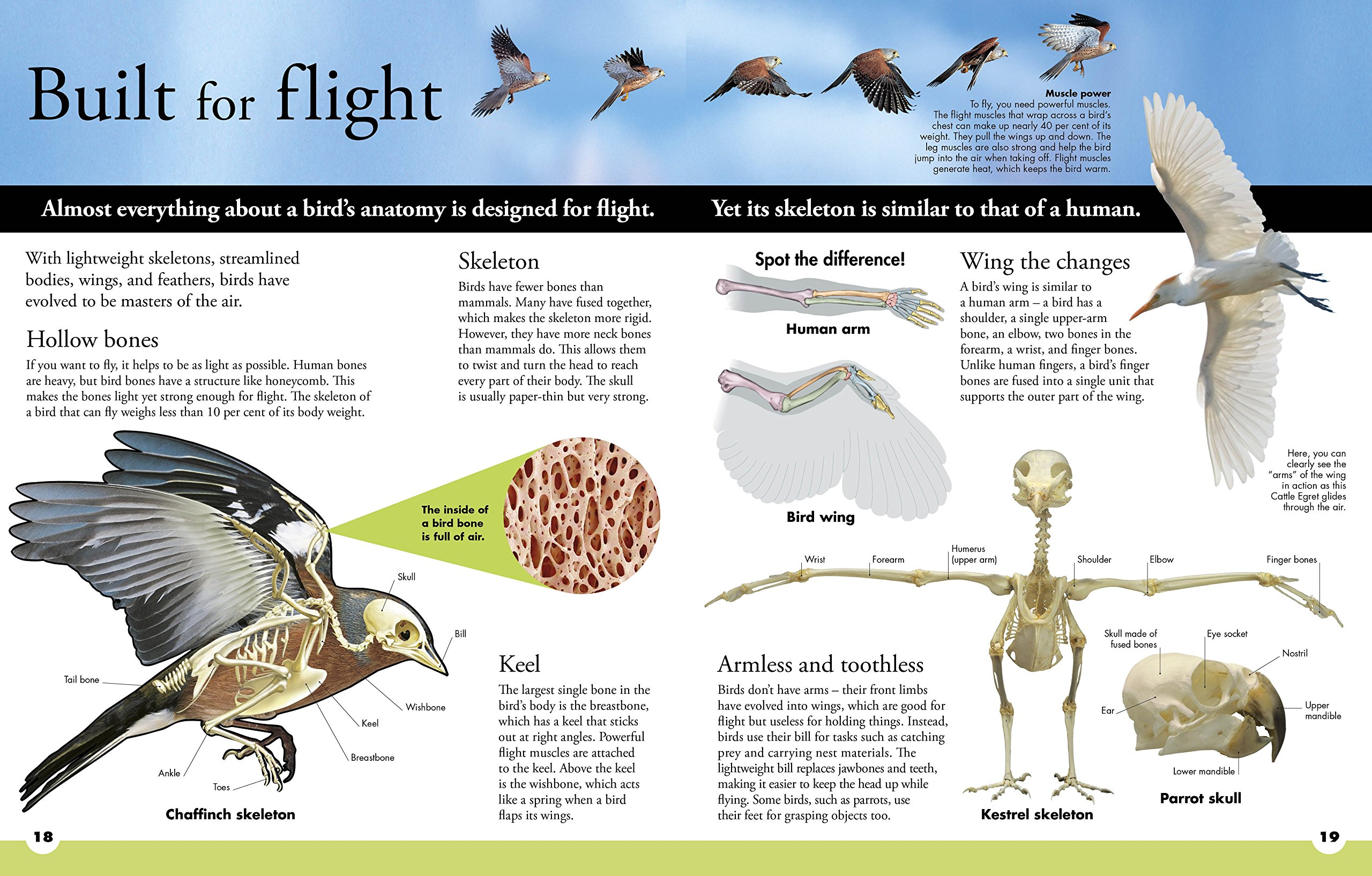 Everything You Need to Know About Birds: Amazon.co.uk: DK ...