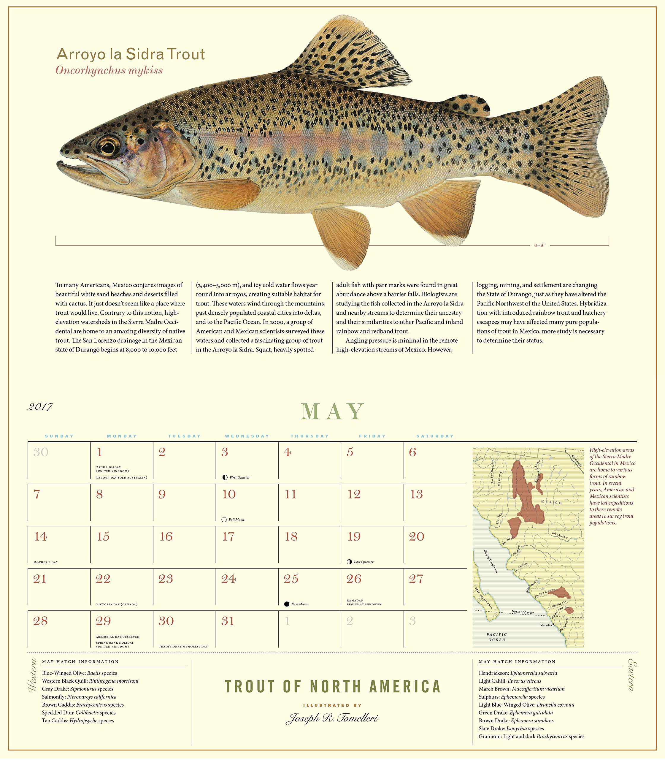 Trout of North America Wall Calendar 2017: Workman Publishing ...
