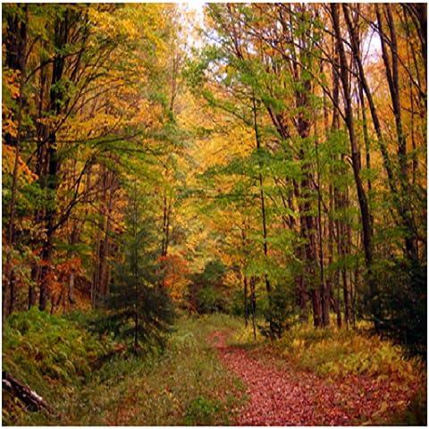 Falling Autumn Leaves - Autumn Falling Leaves