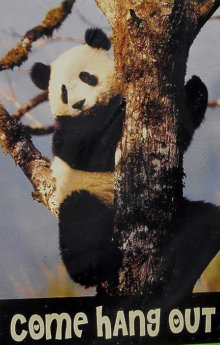 Amazon.com: Animal Planet oso panda come Hang Out Bandera de ...