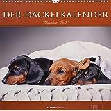 Der Dackelkalender 2019 - Bildkalender (33 x 33) - Tierkalender - Hunde - Dogs - Wandkalender