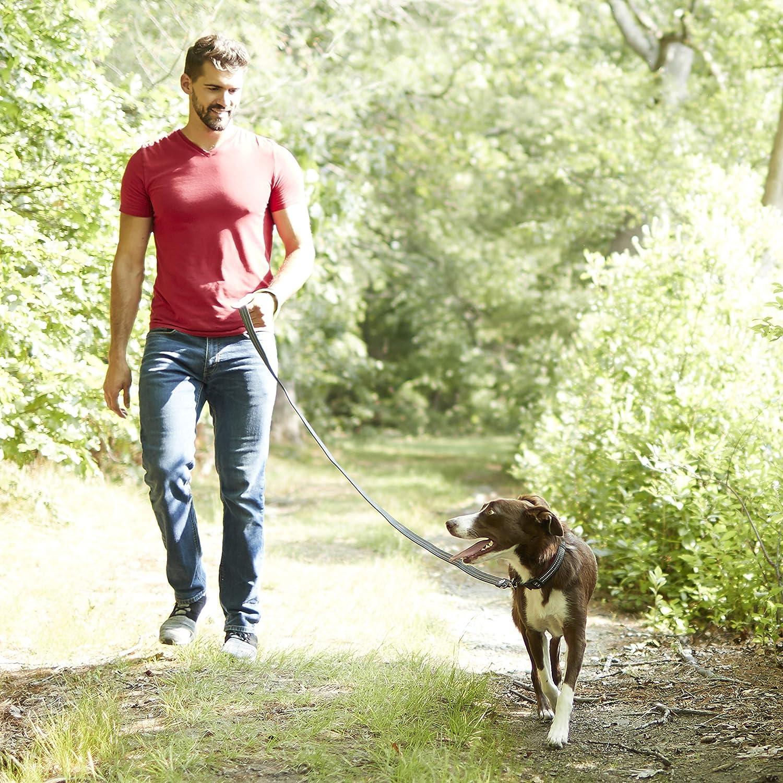 Comfort Fit Reflective Walking Dog Training Neoprene Handle 6 Foot Red Franklin Pet Supply Nylon Dog Leash