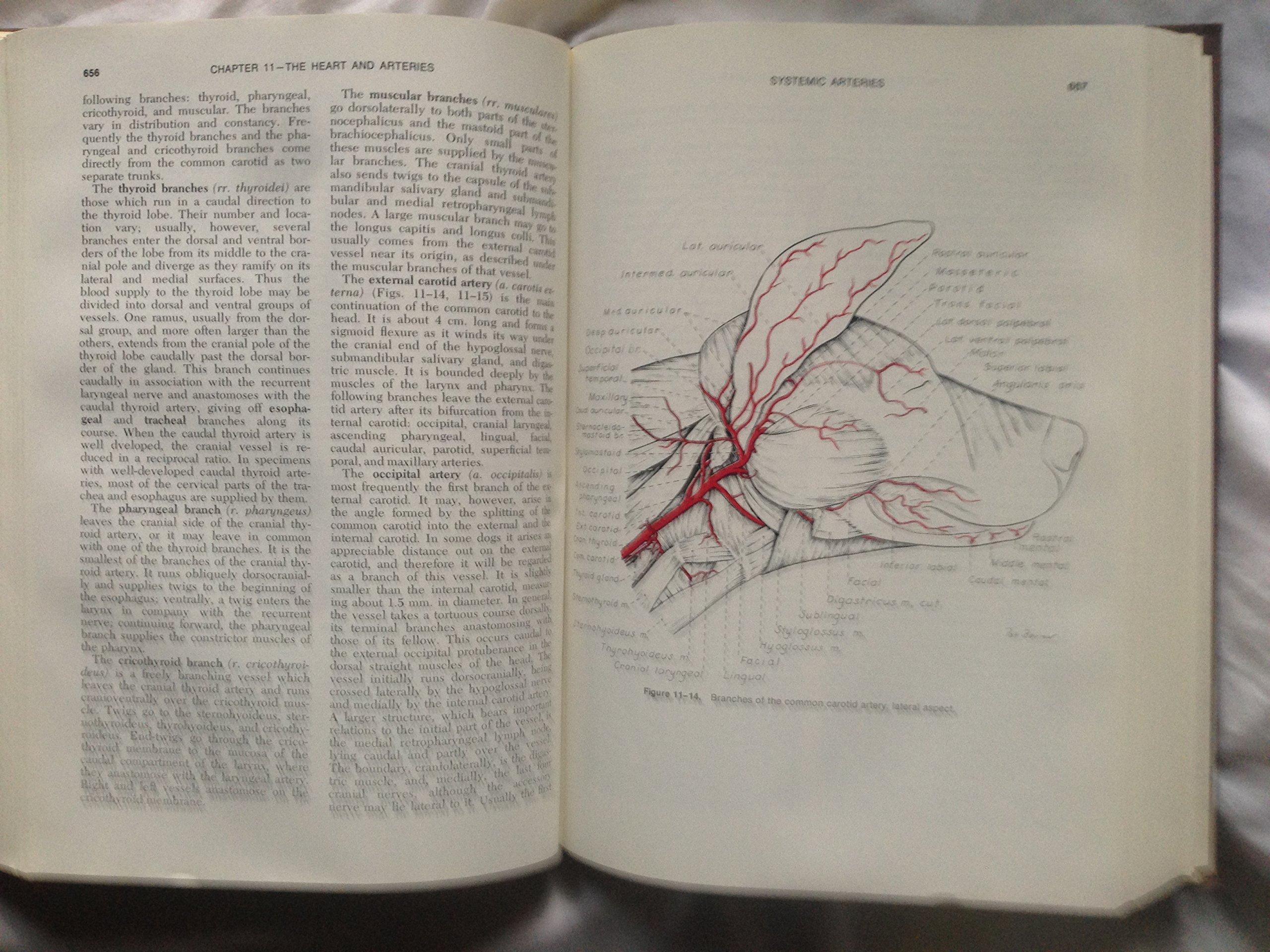 Miller\'s Anatomy of the Dog: Malcolm E. Miller, Howard E. Evans ...