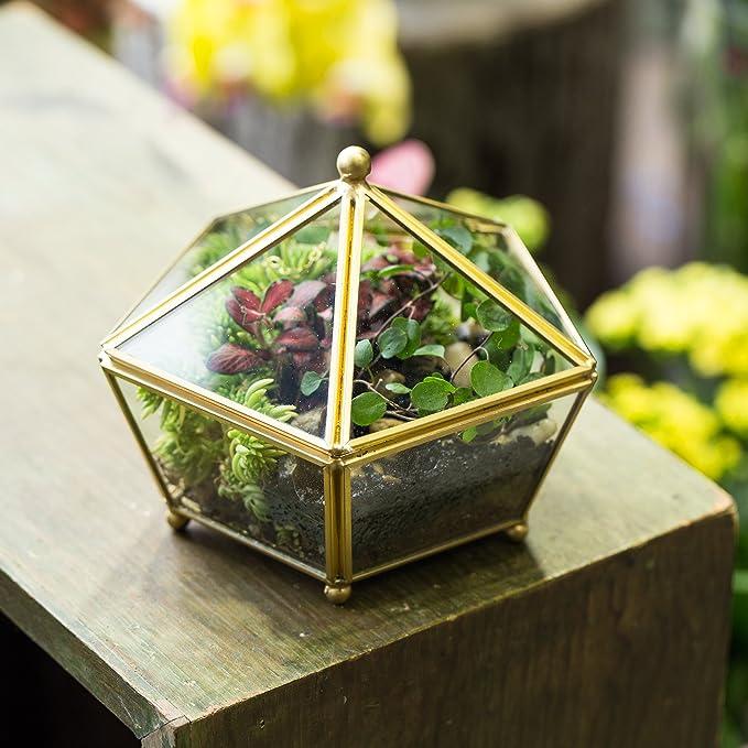 Terrario de estilo retro con patas pequeñas de cobre dorado, cristal transparente, forma joyero pentagonal, para plantas, para escritorio, ...