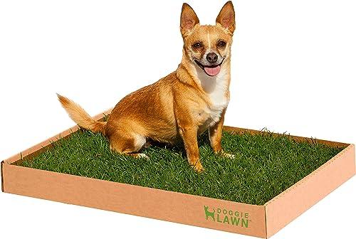 DoggieLawn-Real-Grass-Dog-Potty