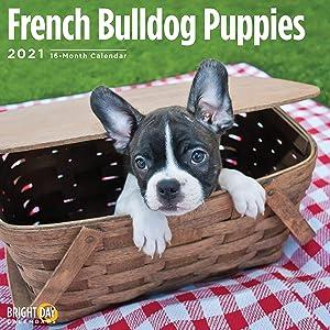 2021 French Bulldog Puppies Wall Calendar by Bright Day, 12 x 12 Inch, Cute Dog